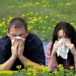 Сезон пыльцы: 7 простых рекомендаций при сезонной аллергии