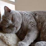 Как животные помогают справиться с унынием и стрессом