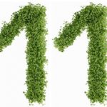 Диета №11 (стол №11): питание при анемии, туберкулезе, истощении организма