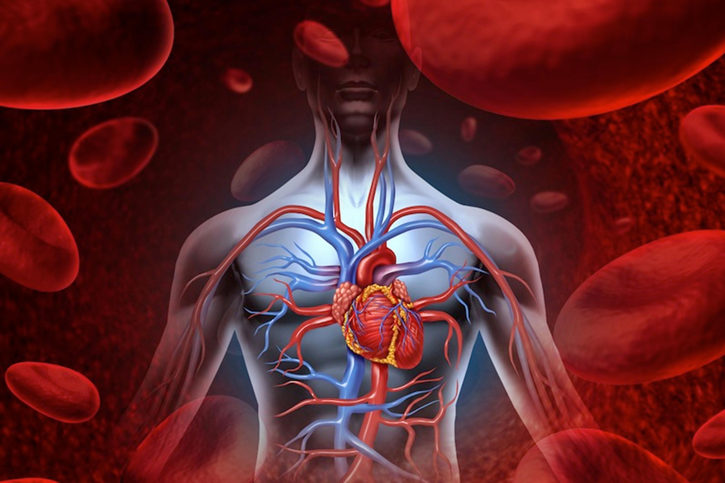 Вот как одна жирная еда может привести к сердечным заболеваниям