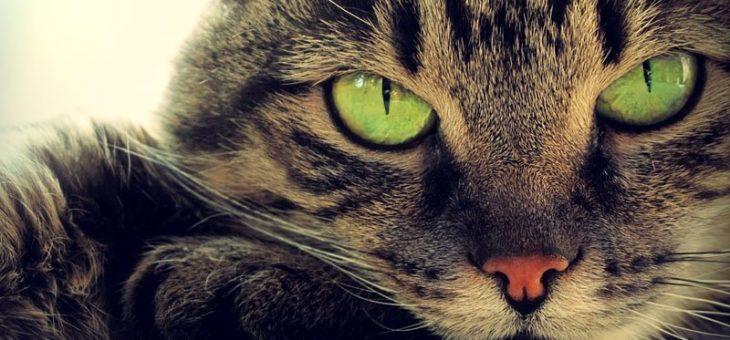 Любители кошек – вот как коты и кошки могут улучшить ваше здоровье