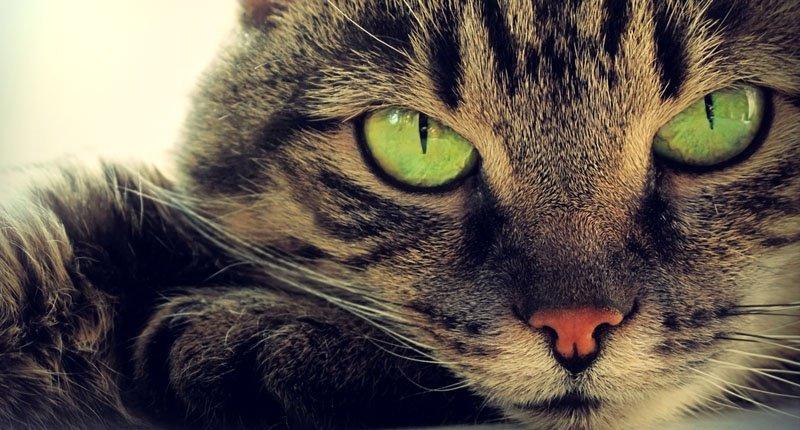 Любители кошек - вот как коты и кошки могут улучшить ваше здоровье