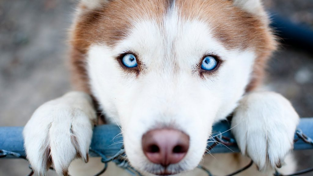 Собаки: Наши лучшие друзья в болезни и в здоровье