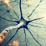 Все, что вам нужно знать о нейронах