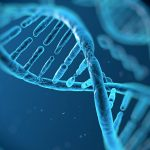 Что такое ДНК и как она работает?