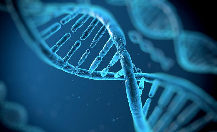 что такое ДНК