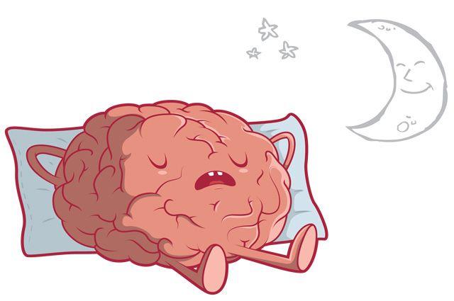 Сон жизненно важен для общего здоровья мозга