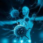 Как работает иммунная система