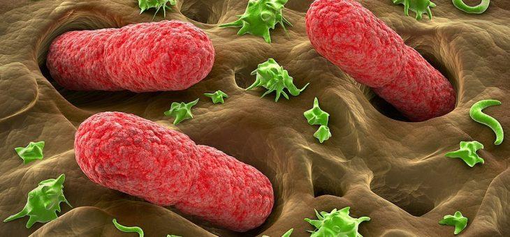Влияют ли кишечные бактерии на развитие рака кишечника?