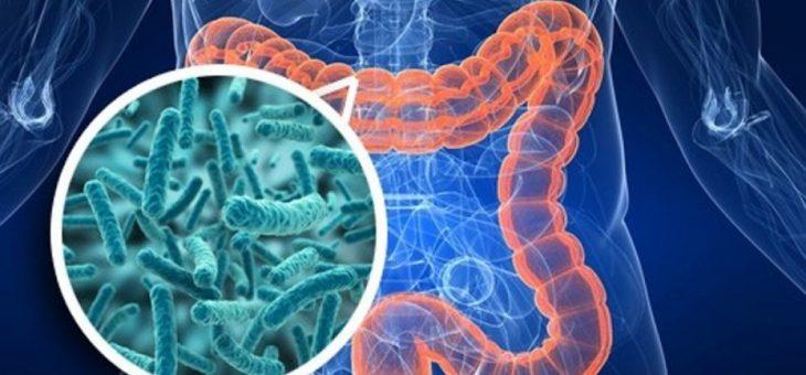 Могут ли кишечные микробы стать ключом к преодолению потери мышечной массы в пожилом возрасте?