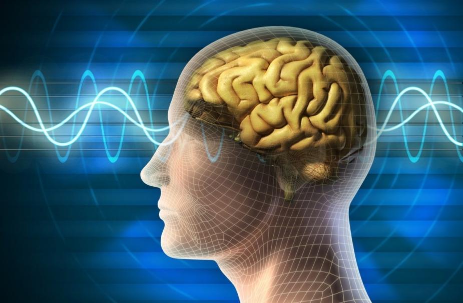 Почему резкие звуки так невыносимы для человеческого мозга?