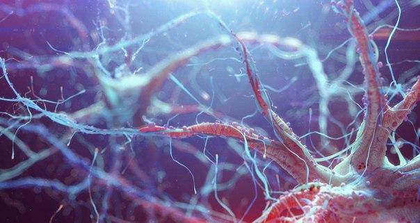 Новый подход к лечению болезни Паркинсона показывает перспективность в клетках мозга