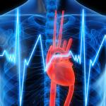 Белок сердечного приступа может повысить риск ранней смерти