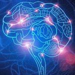 Нейробиологическое исследование: 6 увлекательных открытий