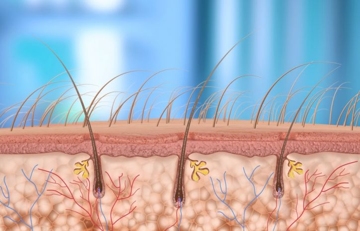 Волосяные фолликулы могут быть местом происхождения меланомы