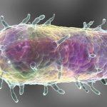Бубонная чума: третий случай зарегистрирован в Китае