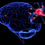 Разрушение транспорта в клетках мозга может привести к болезни Альцгеймера, Паркинсона