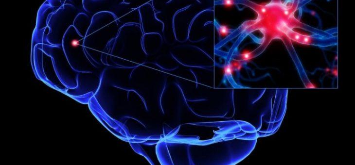 Почему формирующие память нейроны уязвимы для болезни Альцгеймера