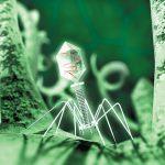 Как «хорошие» вирусы могут влиять на здоровье