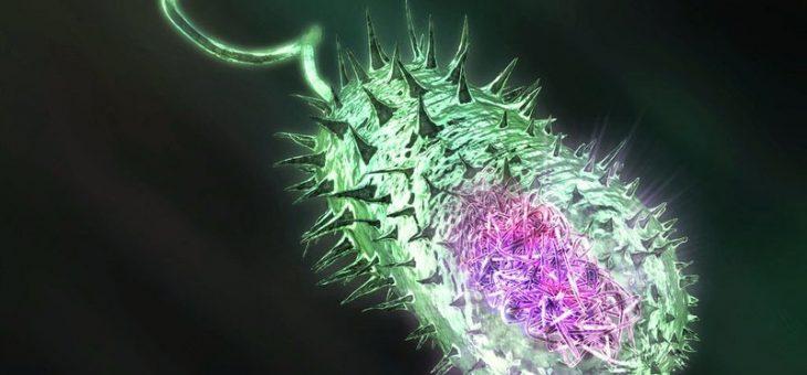 Acinetobacter: что нужно знать