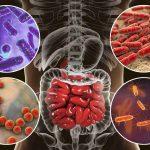 Обычная пища изменяет кишечные бактерии, воздействуя на вирусы