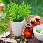Лечение болезни Лайма: 2 травяных компонента могут побить антибиотики