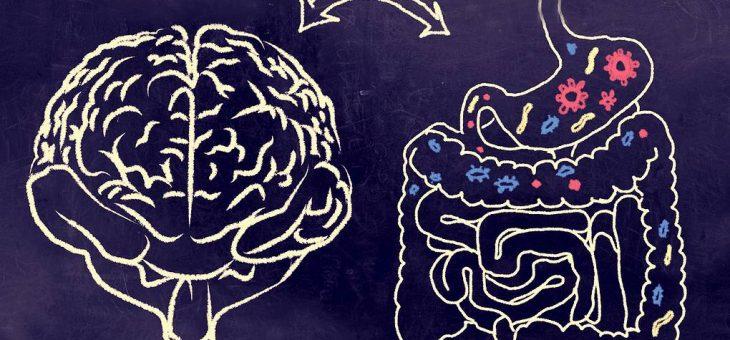Изучите карты кишечных бактерий и взаимодействия иммунных клеток
