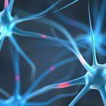 Сеть нейронов создает уникальный ритм для каждого вздоха