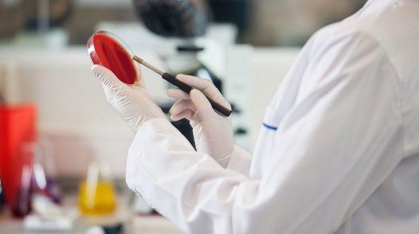 Раковые опухоли приобретают лекарственную устойчивость, поедая мертвые клетки
