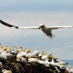 Изучение прибрежных птиц показывает, что при сохранении видов не все земли равны