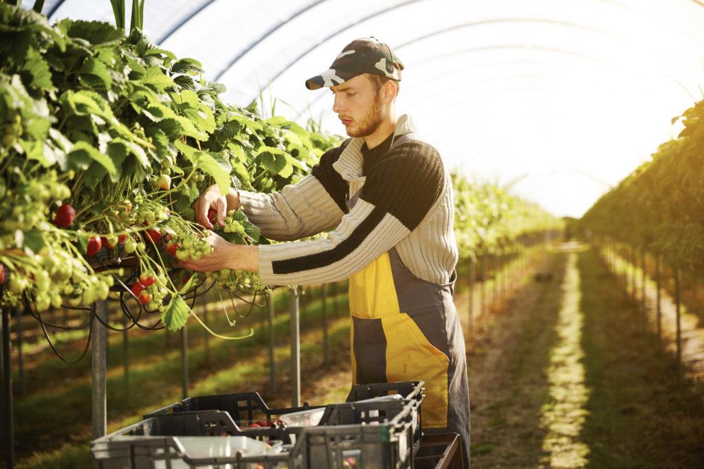 COVID-19 показывает слабые места в мировой продовольственной системе