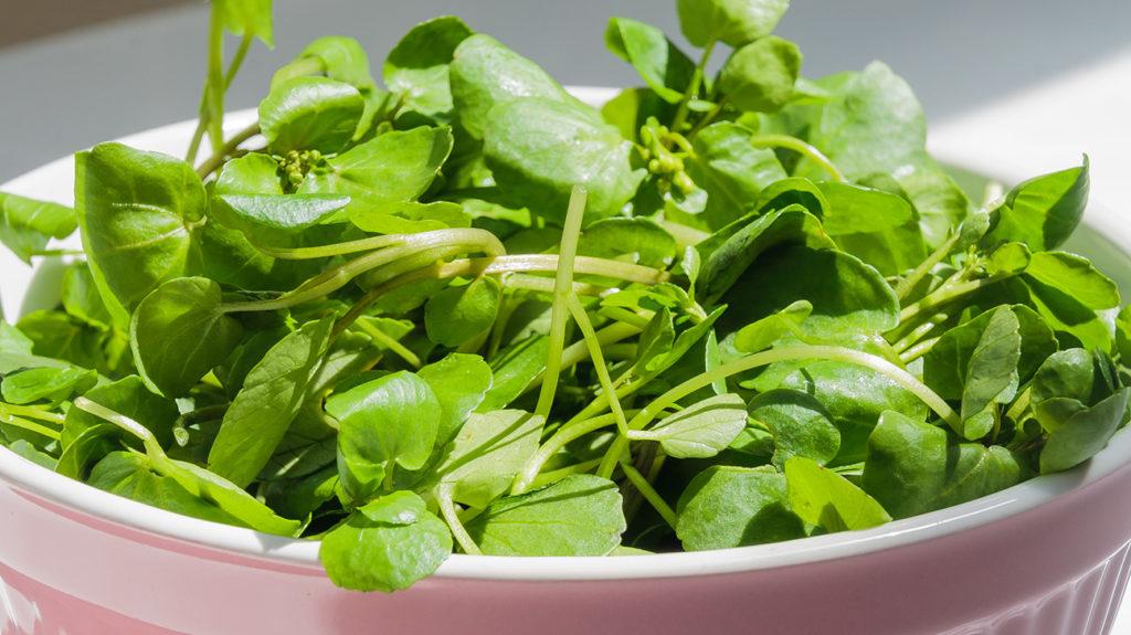 10 лучших овощей для белка