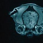 Человеческий мозг не более эффективен, чем мозг других млекопитающих