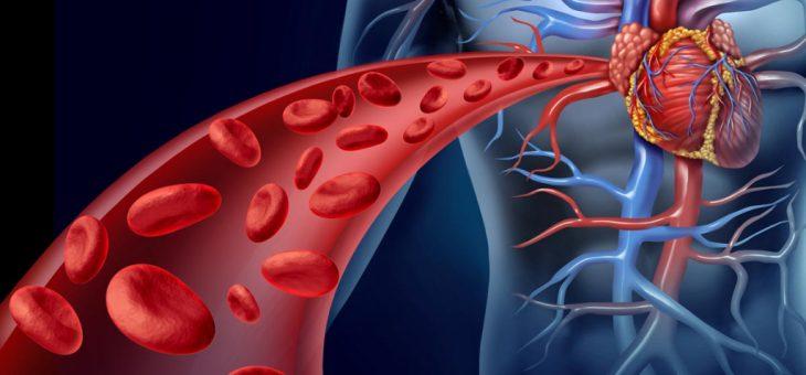 Выращенные в лаборатории бьющиеся клетки сердца определяют потенциальное лекарство для предотвращения повреждения сердца, связанного с COVID-19