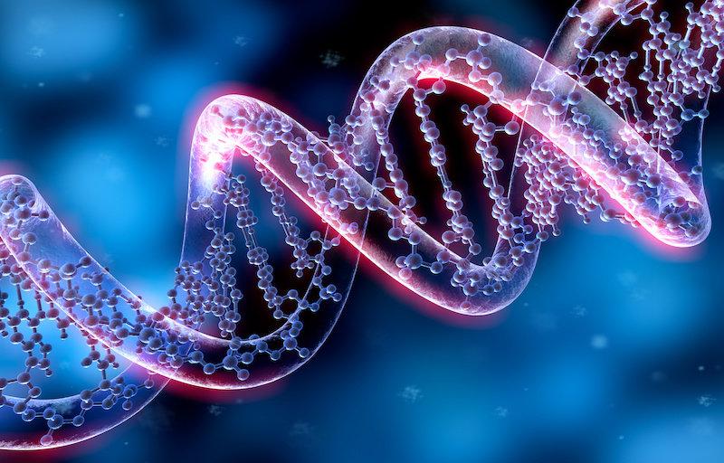 Новый метод может выявить, какие гены мы могли унаследовать от неандертальцев
